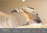 Birds found in Malta (Wall Calendar 2019 DIN A4 Landscape) - Produktdetailbild 12