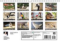 Birds found in Malta (Wall Calendar 2019 DIN A4 Landscape) - Produktdetailbild 13