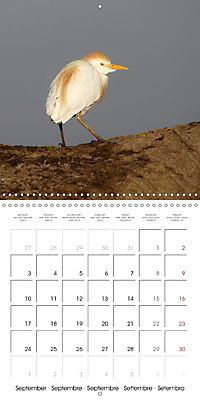 Birds of Africa (Wall Calendar 2018 300 × 300 mm Square) - Produktdetailbild 9