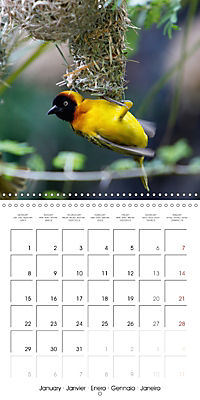 Birds of Africa (Wall Calendar 2018 300 × 300 mm Square) - Produktdetailbild 1