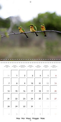 Birds of Africa (Wall Calendar 2018 300 × 300 mm Square) - Produktdetailbild 5