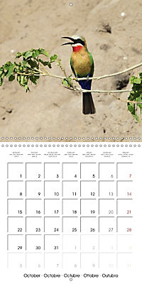 Birds of Africa (Wall Calendar 2018 300 × 300 mm Square) - Produktdetailbild 10