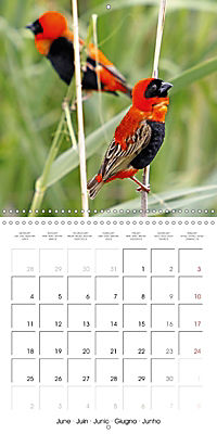 Birds of Africa (Wall Calendar 2018 300 × 300 mm Square) - Produktdetailbild 6