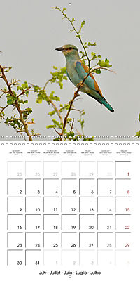 Birds of Africa (Wall Calendar 2018 300 × 300 mm Square) - Produktdetailbild 7