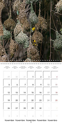 Birds of Africa (Wall Calendar 2018 300 × 300 mm Square) - Produktdetailbild 11
