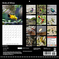Birds of Africa (Wall Calendar 2018 300 × 300 mm Square) - Produktdetailbild 13