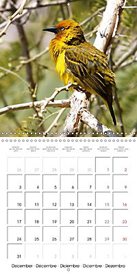 Birds of Africa (Wall Calendar 2018 300 × 300 mm Square) - Produktdetailbild 12