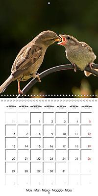 Birds - Potpourri (Wall Calendar 2019 300 × 300 mm Square) - Produktdetailbild 5