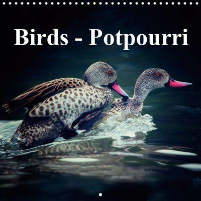 Birds - Potpourri (Wall Calendar 2019 300 × 300 mm Square), Gabriela Wernicke-Marfo