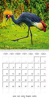 Birds - Potpourri (Wall Calendar 2019 300 × 300 mm Square) - Produktdetailbild 6