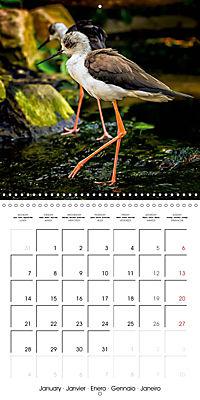 Birds - Potpourri (Wall Calendar 2019 300 × 300 mm Square) - Produktdetailbild 1
