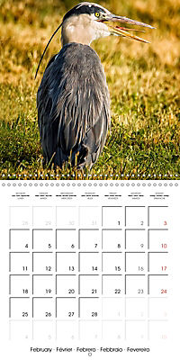 Birds - Potpourri (Wall Calendar 2019 300 × 300 mm Square) - Produktdetailbild 2