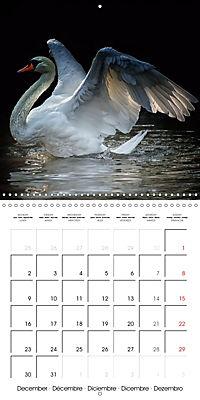 Birds - Potpourri (Wall Calendar 2019 300 × 300 mm Square) - Produktdetailbild 12