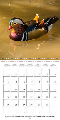 Birds - Potpourri (Wall Calendar 2019 300 × 300 mm Square) - Produktdetailbild 11