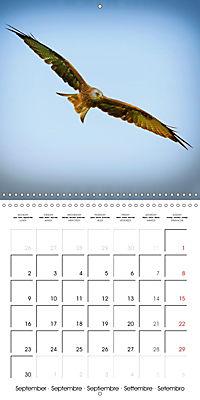 Birds - Potpourri (Wall Calendar 2019 300 × 300 mm Square) - Produktdetailbild 9