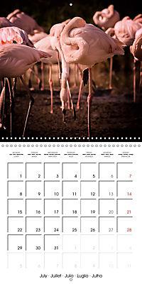 Birds - Potpourri (Wall Calendar 2019 300 × 300 mm Square) - Produktdetailbild 7