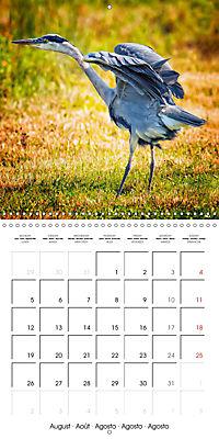 Birds - Potpourri (Wall Calendar 2019 300 × 300 mm Square) - Produktdetailbild 8