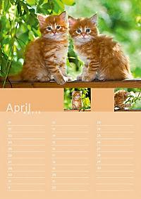 Birthday Calendar - Produktdetailbild 4