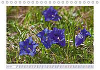 Blaues Wunder der Natur (Tischkalender 2019 DIN A5 quer) - Produktdetailbild 4