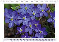 Blaues Wunder der Natur (Tischkalender 2019 DIN A5 quer) - Produktdetailbild 7