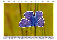Blaues Wunder der Natur (Tischkalender 2019 DIN A5 quer) - Produktdetailbild 5