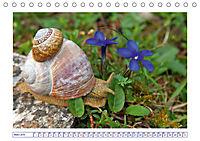 Blaues Wunder der Natur (Tischkalender 2019 DIN A5 quer) - Produktdetailbild 3