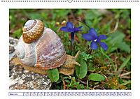 Blaues Wunder der Natur (Wandkalender 2019 DIN A2 quer) - Produktdetailbild 3
