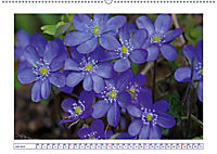Blaues Wunder der Natur (Wandkalender 2019 DIN A2 quer) - Produktdetailbild 7