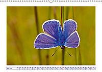 Blaues Wunder der Natur (Wandkalender 2019 DIN A3 quer) - Produktdetailbild 5