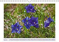 Blaues Wunder der Natur (Wandkalender 2019 DIN A4 quer) - Produktdetailbild 4