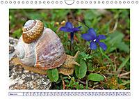 Blaues Wunder der Natur (Wandkalender 2019 DIN A4 quer) - Produktdetailbild 3