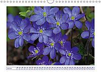 Blaues Wunder der Natur (Wandkalender 2019 DIN A4 quer) - Produktdetailbild 7