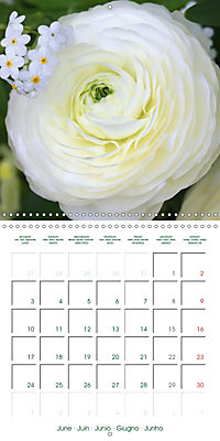 Blooms in White (Wall Calendar 2019 300 × 300 mm Square) - Produktdetailbild 6
