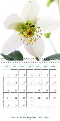 Blooms in White (Wall Calendar 2019 300 × 300 mm Square) - Produktdetailbild 1