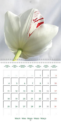 Blooms in White (Wall Calendar 2019 300 × 300 mm Square) - Produktdetailbild 3