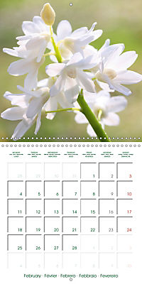 Blooms in White (Wall Calendar 2019 300 × 300 mm Square) - Produktdetailbild 2
