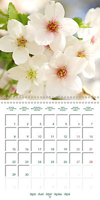Blooms in White (Wall Calendar 2019 300 × 300 mm Square) - Produktdetailbild 4