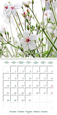 Blooms in White (Wall Calendar 2019 300 × 300 mm Square) - Produktdetailbild 10