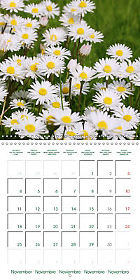 Blooms in White (Wall Calendar 2019 300 × 300 mm Square) - Produktdetailbild 11