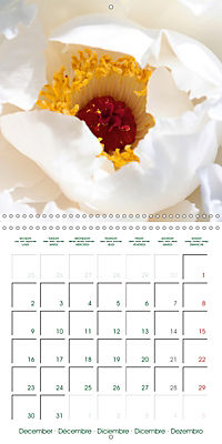 Blooms in White (Wall Calendar 2019 300 × 300 mm Square) - Produktdetailbild 12
