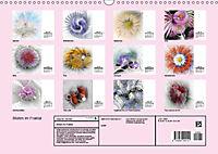 Blüten im Fraktal (Wandkalender 2019 DIN A3 quer) - Produktdetailbild 13