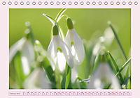 Blüten - Zauber aus dem Garten (Tischkalender 2019 DIN A5 quer) - Produktdetailbild 2