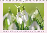Blüten - Zauber aus dem Garten (Wandkalender 2019 DIN A4 quer) - Produktdetailbild 2