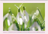Blüten - Zauber aus dem Garten (Wandkalender 2019 DIN A2 quer) - Produktdetailbild 2