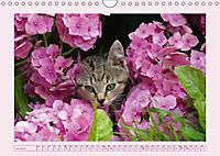 Blüten - Zauber aus dem Garten (Wandkalender 2019 DIN A4 quer) - Produktdetailbild 7