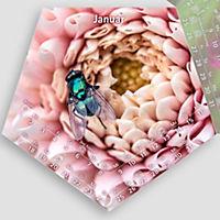 Blütenflieger 2019 - Produktdetailbild 1