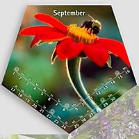 Blütenflieger 2019 - Produktdetailbild 3
