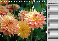 Blütenschau 2019 (Tischkalender 2019 DIN A5 quer) - Produktdetailbild 1