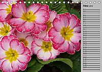 Blütenschau 2019 (Tischkalender 2019 DIN A5 quer) - Produktdetailbild 13