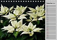 Blütenschau 2019 (Tischkalender 2019 DIN A5 quer) - Produktdetailbild 12